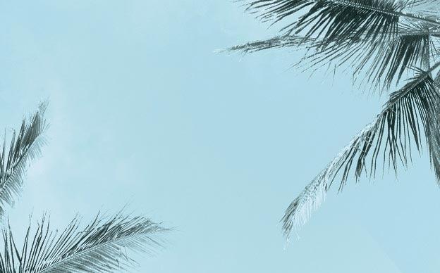 Palmiers avec ciel bleu